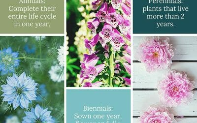 Herbaceous Plant Types
