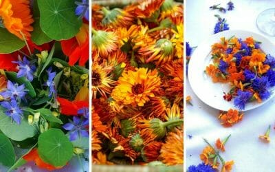 Top 5 uses for edible flowers